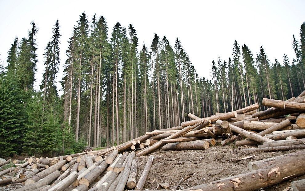 Вбросы о том, что варварски будет уничтожен лесной массив